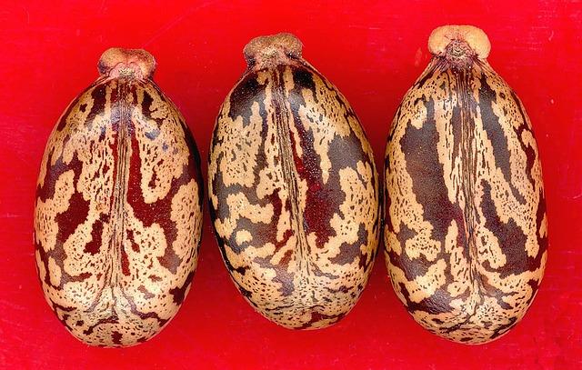 Las semillas del ricino tiene propiedades laxantes.