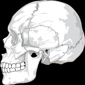 Los huesos necesitan vitamina D.