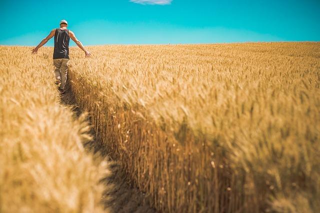 Cereales fuente de vitamina B3.