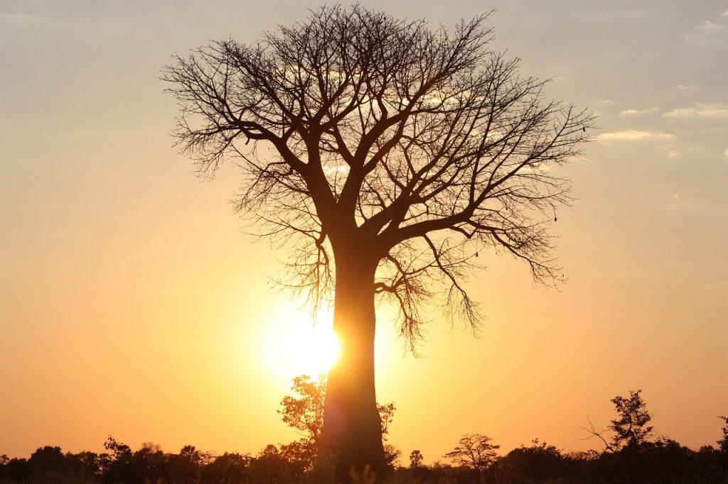 Aceite de baobab