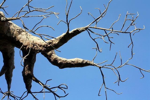 beneficios baobab