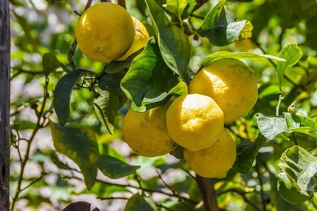 propiedades, aromaterapia aceite esencial limon