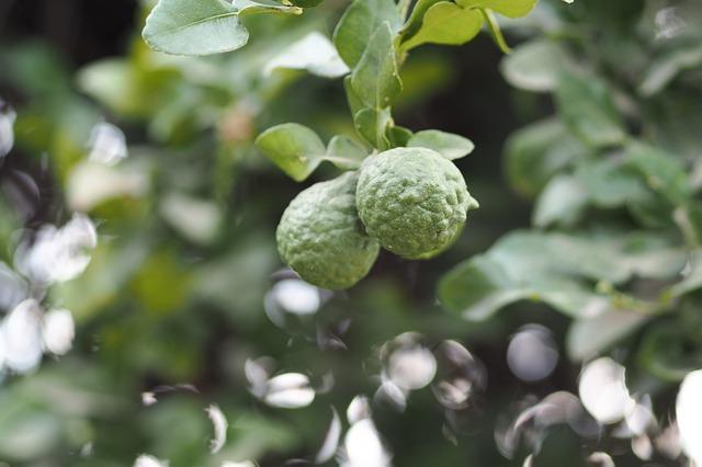 donde comprar, contraindicaciones, mezcla bergamota