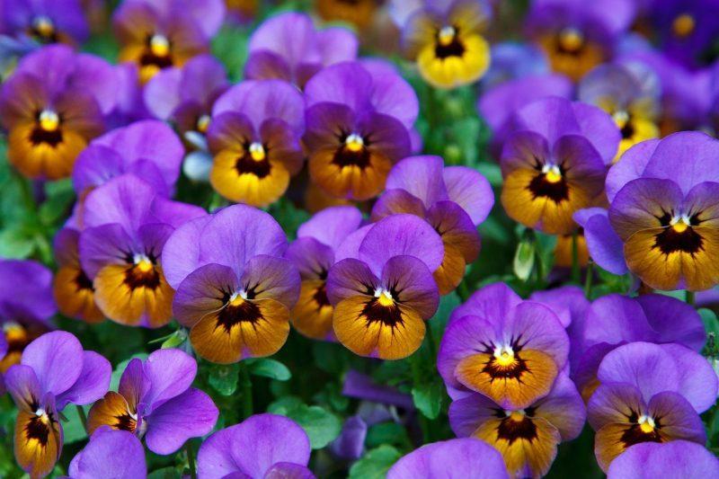 plantas para piel grasa y acne