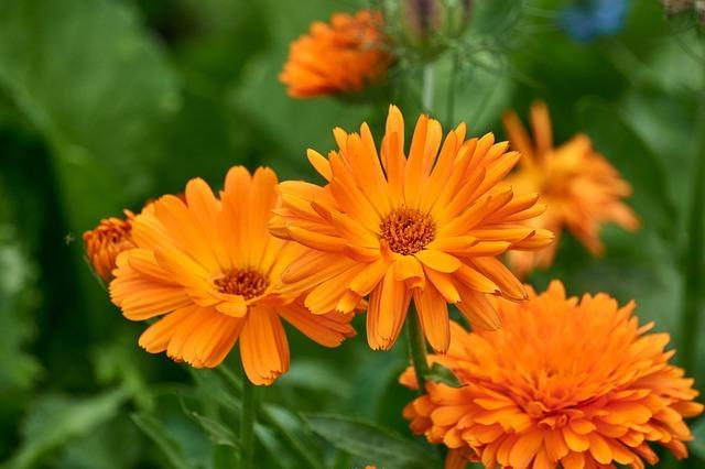 usos piel grasa plantas antisepticas