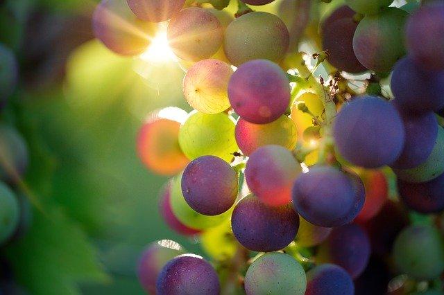 el aceite de pepita o semilla de uva y sus propiedades hidratantes y rejuvenecedoras