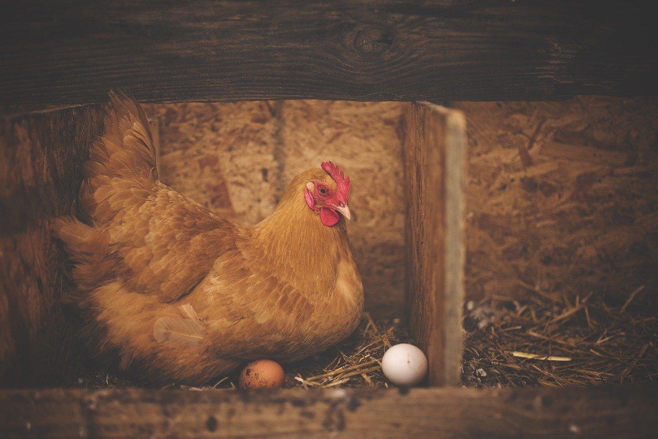 que vitaminas tiene el huevo