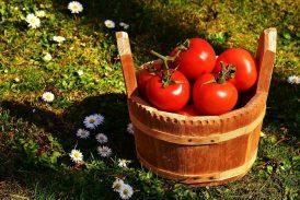 contenido en vitaminas y minerales del tomate